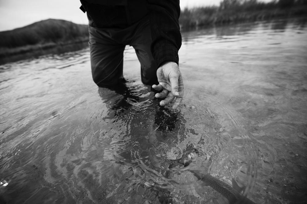 Release. Fall. Silver Creek, Idaho.