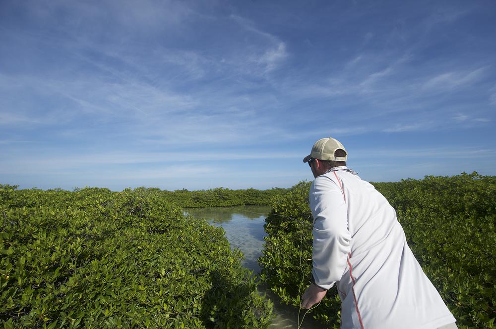 nick casting mangroves.jpg