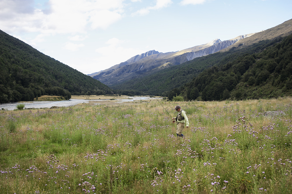 NZ CP Walking Mtns Thistle.jpg