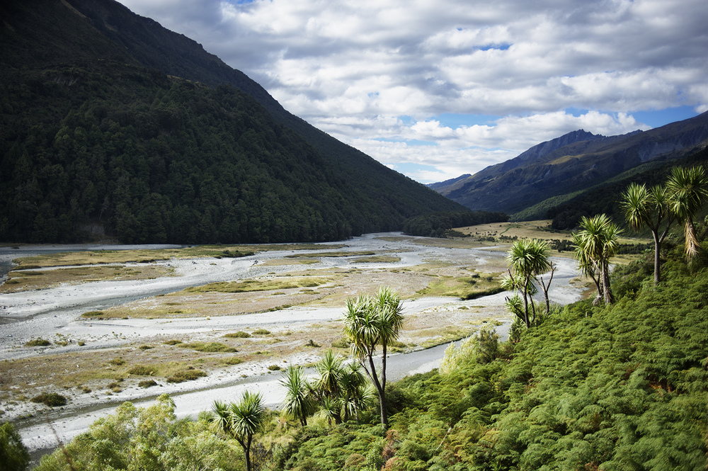 NZ Cabbage Trees & River.jpg