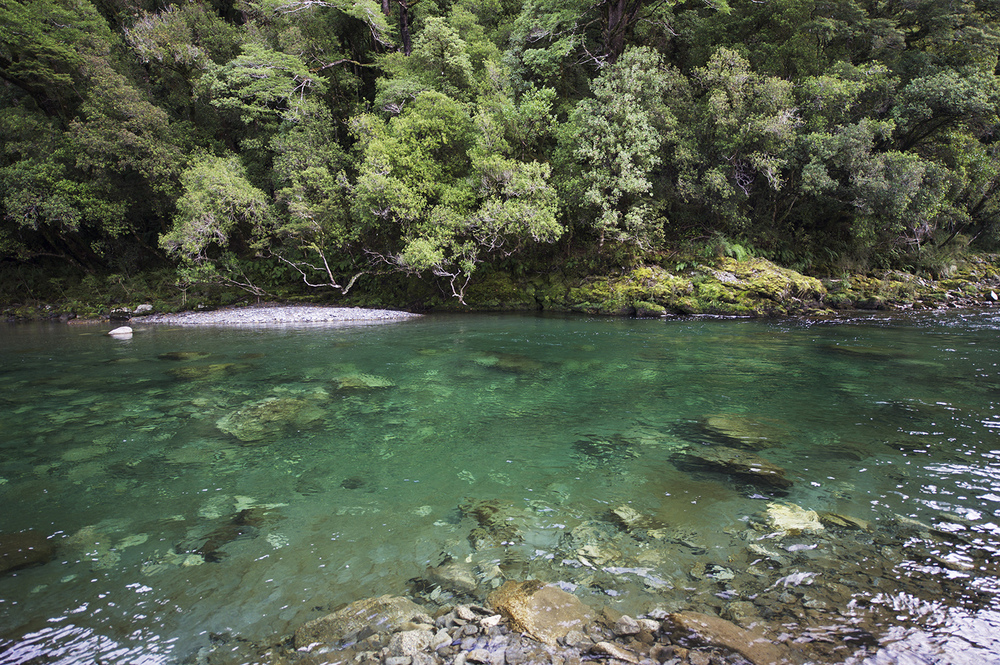 NZ Clear Water & Forest.jpg