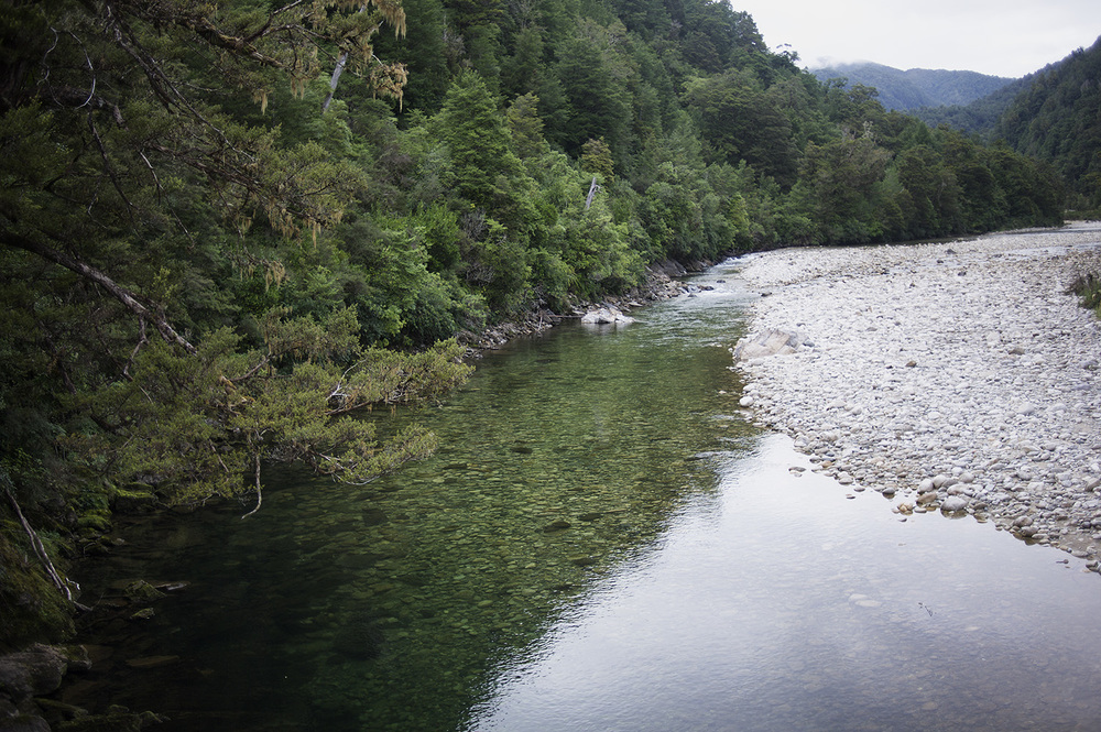 NZ River Clear Water Forest.jpg