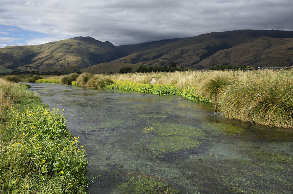 NZ Spring Creek Flowers & Water.jpg
