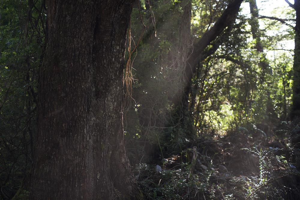 thicket light.jpg