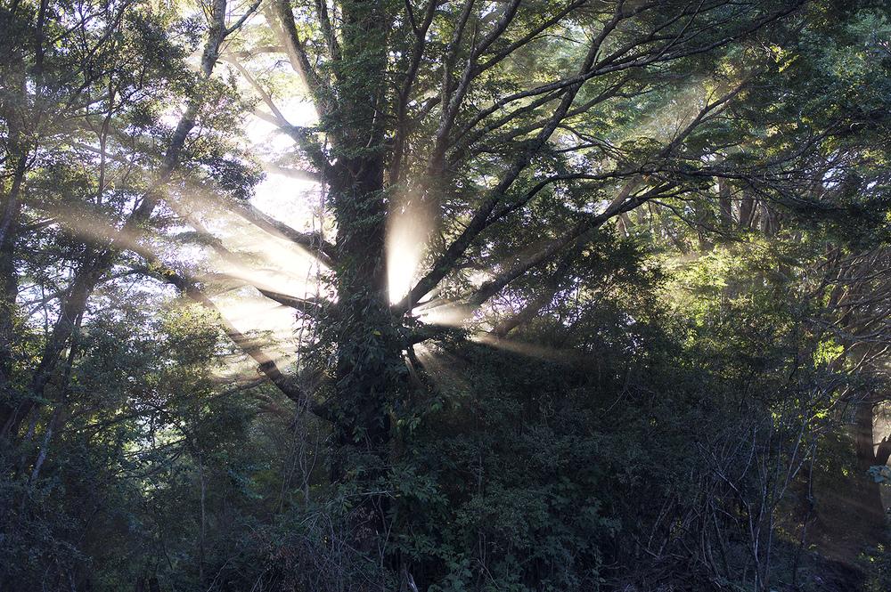 tree rays.jpg