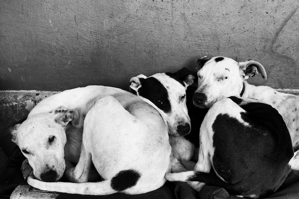 3 dogs bw.jpg