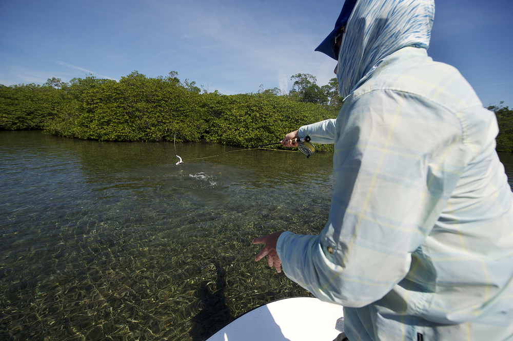 A bow to the tarpon. Eric Lyon hooked up in the mangroves.