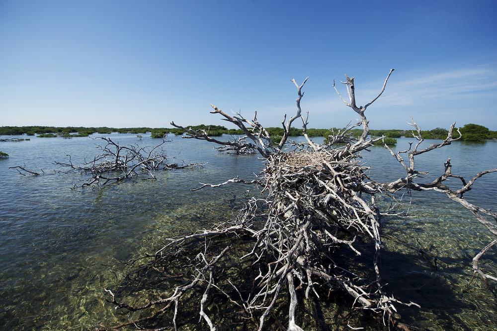 An Osprey Nest