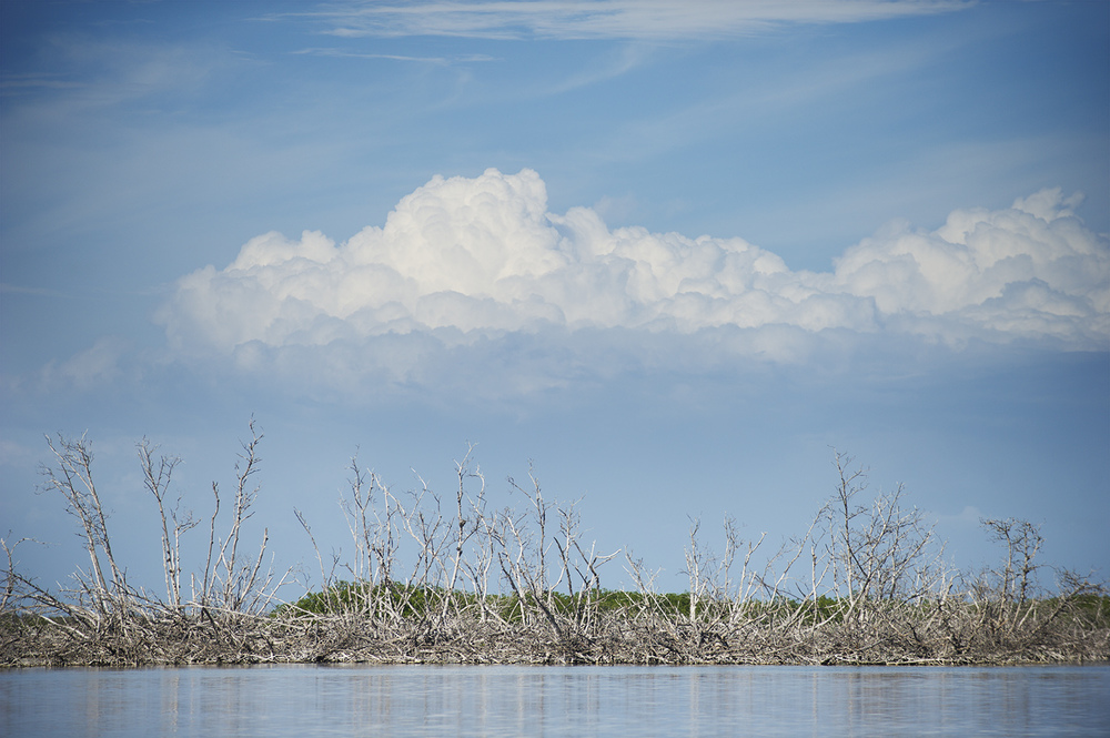 mangroves clouds.jpg