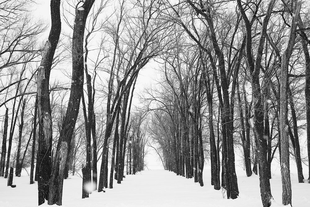 Black White Landscape Nick Price Photography