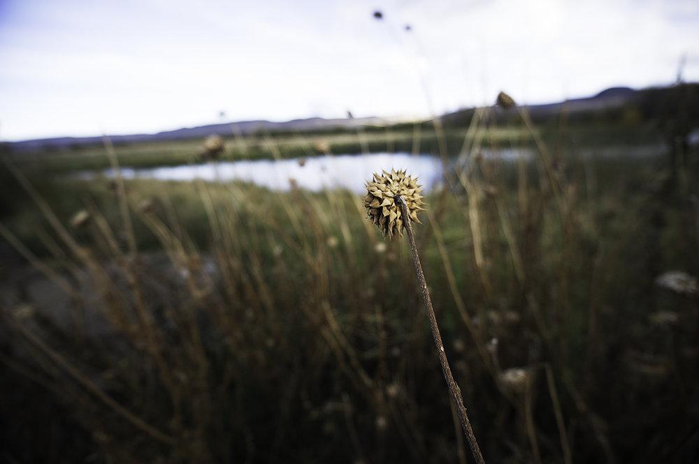 plants argentina.jpg