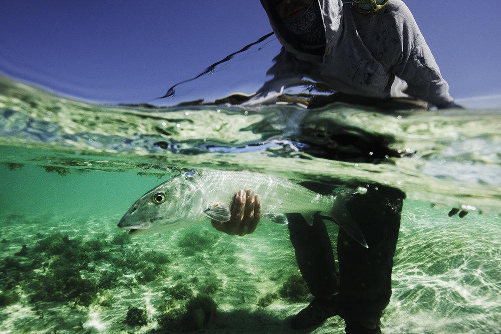 A Farawy Cayes bonefish