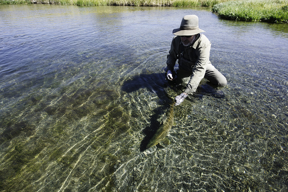 Jim Skochdopole releases a nice Silver Creek brown on a beautiful early September day. Idaho