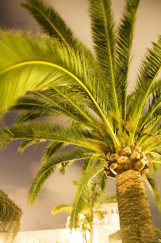 Palme.jpg