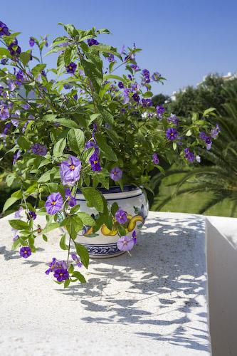 622-Blomst på terrassen.jpg