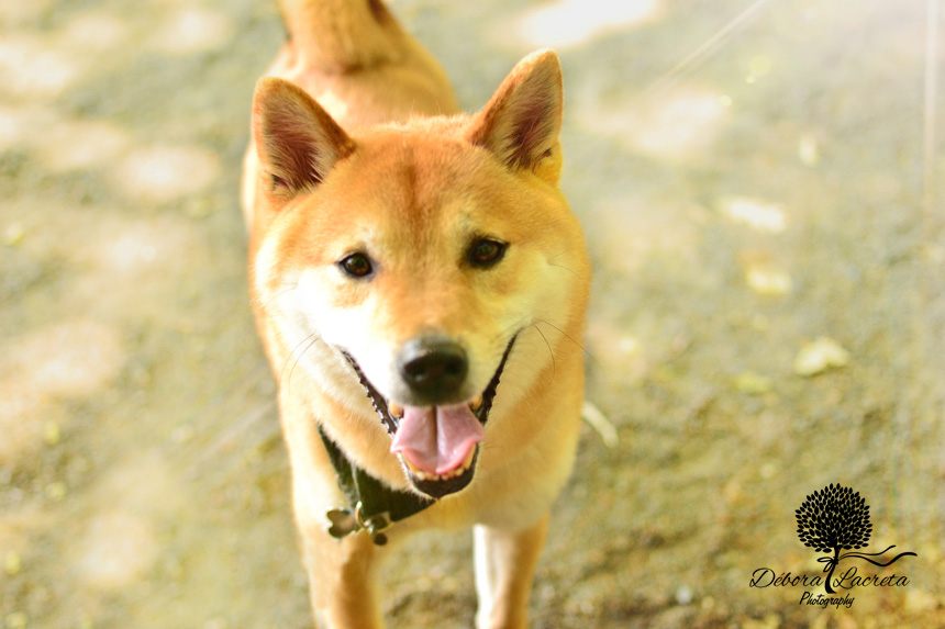nycdog-ws.jpg