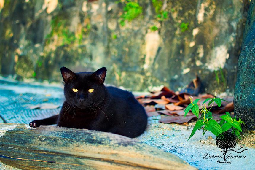 Puerto-Rico-cat-ws.jpg