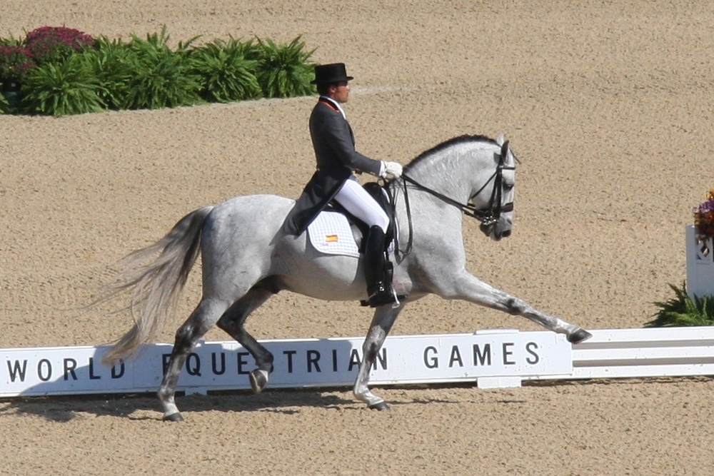 Norte and rider José Antonio Garcia Mena at the 2010 WEG. Photo: Sarah C. Shechner
