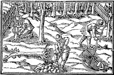 17th century woodcut of men working in an orchard with some various tools.  (Countrie Farme, 1616).