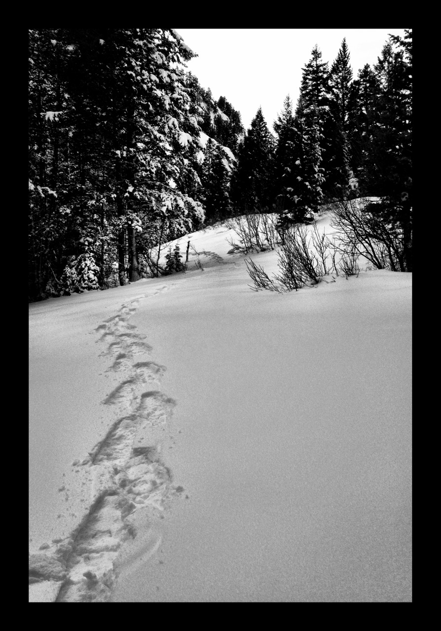 Snowshoeing and the benefits of inefficiency