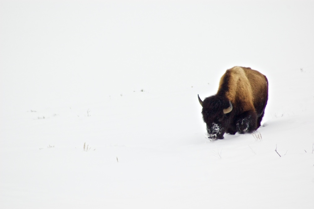 Yellowstone 3.jpg