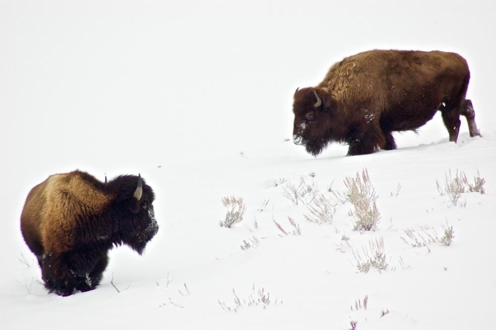 Yellowstone 4.jpg