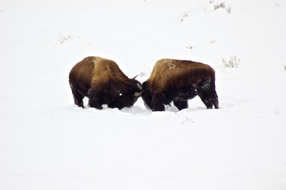 Yellowstone 5.jpg