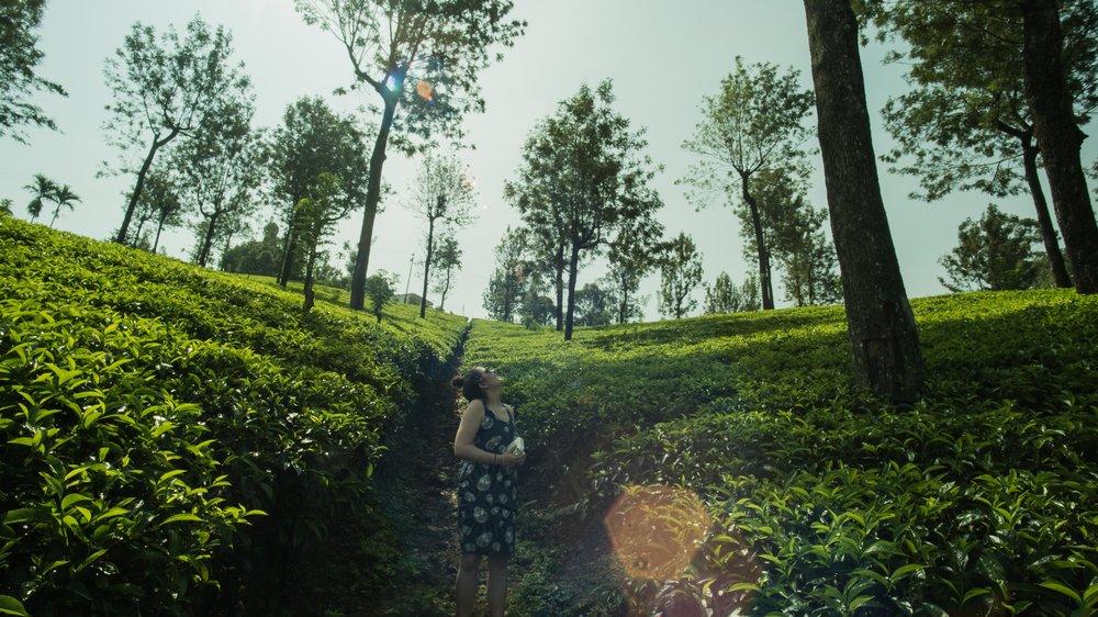 Jess Dowse, travel filmmaker in a tea plantation, Sri Lanka