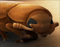 Insect3.jpg