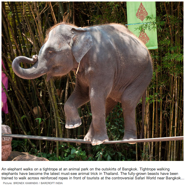 Elephant+on+a+Tightrope.png
