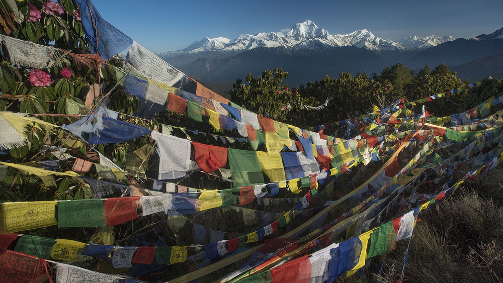 Prayer flags flap in the wind, blessing both the inhabitants of these high hills and the trekkers who come to explore these areas.  The Dhaulagiri massif lay in the background, spanning 120km through the Himalayas.