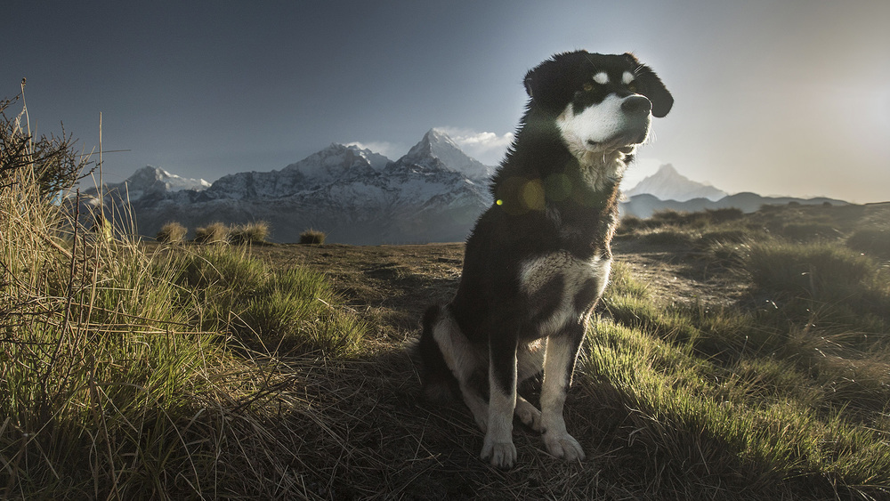 One of my favourite moments of the whole trip. This beautiful mountain dog saw something in the distance and just sat fixated.  He was not aggressive or excited, just sat very peaceful like a living statue.