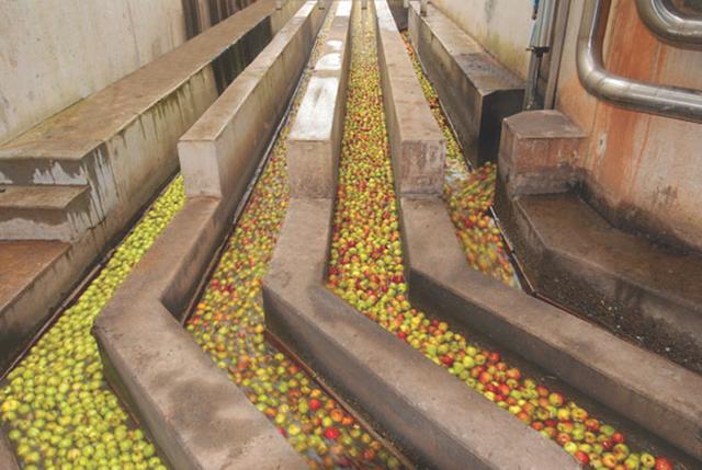 organic-cider-bulk