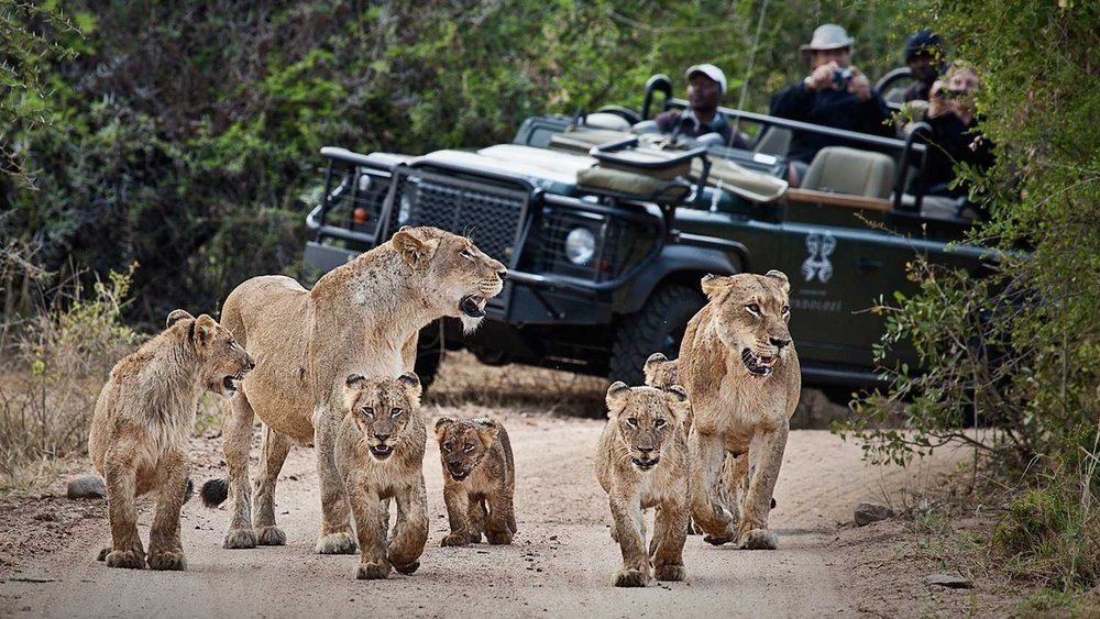 Safari Experience   - The ultimate experience having close encounters with the Big 5 in their habitat. The Londolozi Game Reserve is situated on the Sand River in the very heart of the Sabi Sand Game Reserve and incorporates the Kruger National Park.