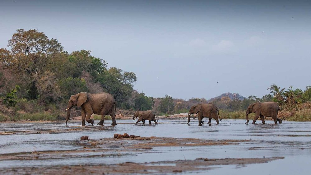 Londo elephant.jpg