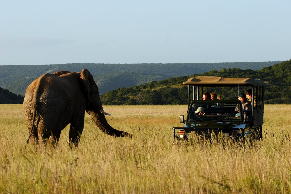 Elephant game drive.jpg