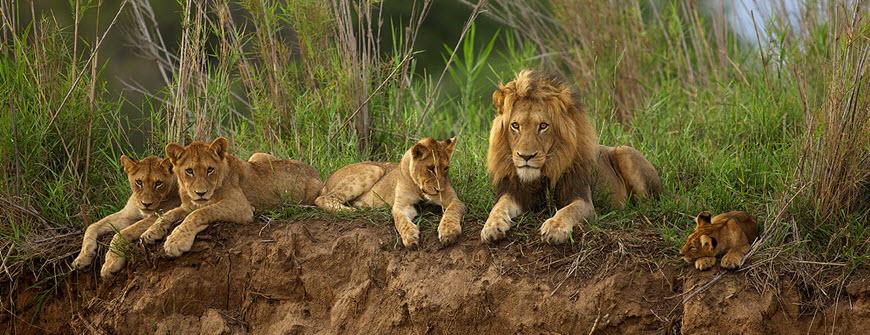 lions Londo.jpg