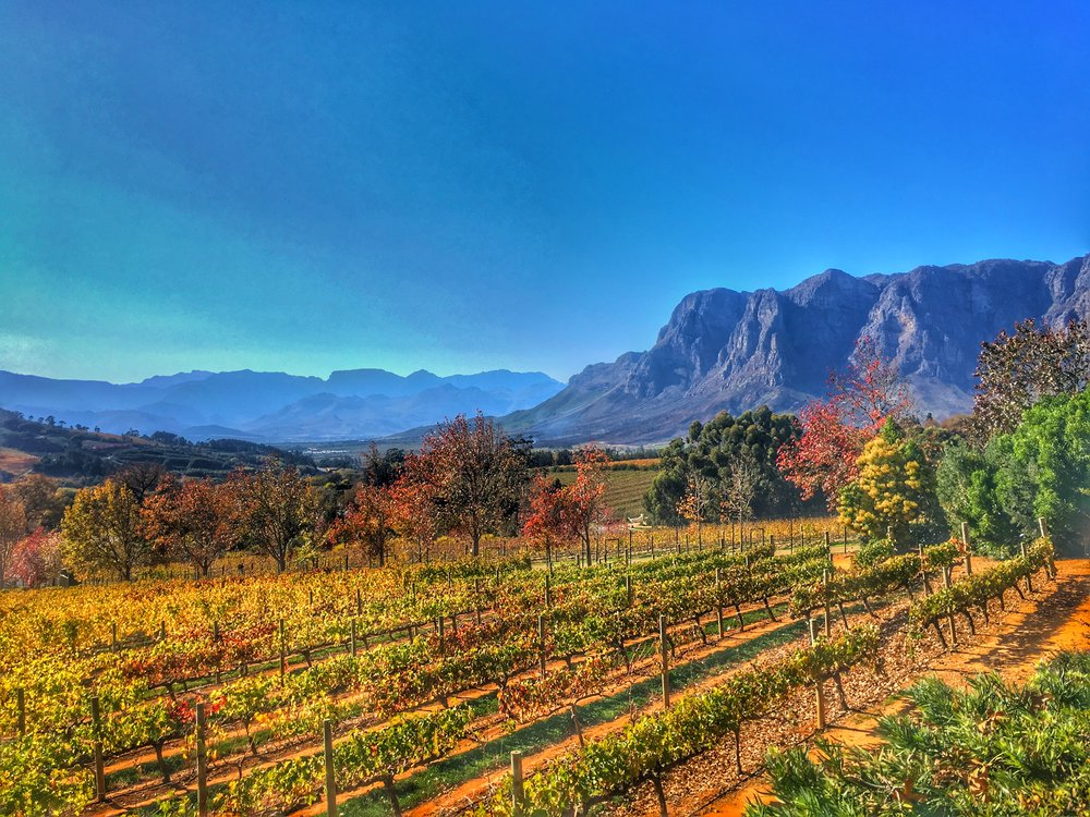 South African Winelands - Some of the worlds top wineries are found just outside Cape Town in the Stellenbosch and Franschhoek areas.
