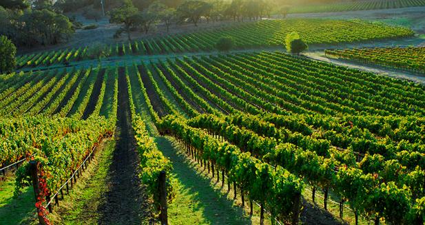 ernie wine1.png