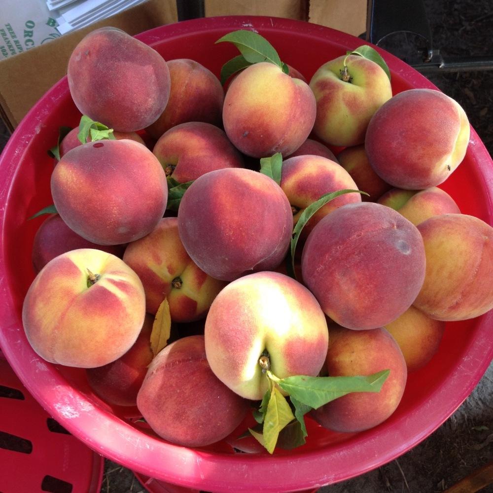 bowl peaches.jpg