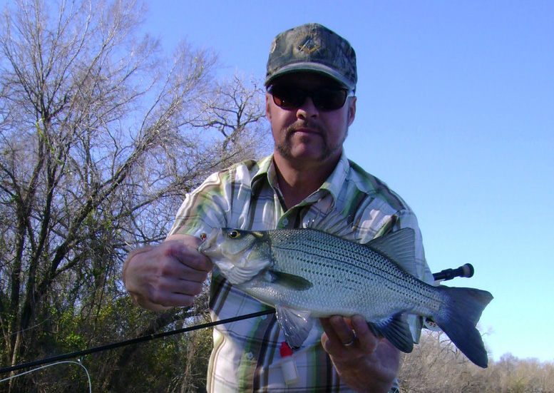 Clay Towery with a Colorado River white bass