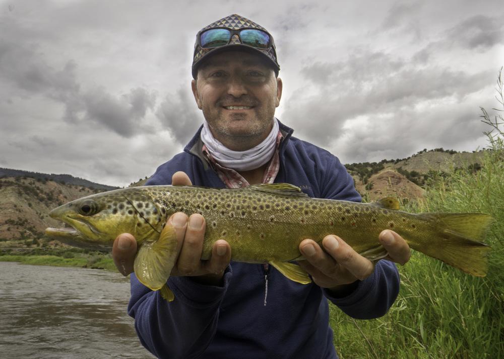 Colorado River Brown Trout
