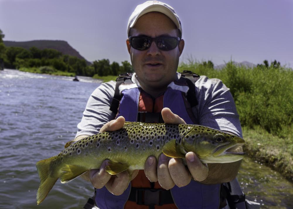 Colorado River Brown YTrout