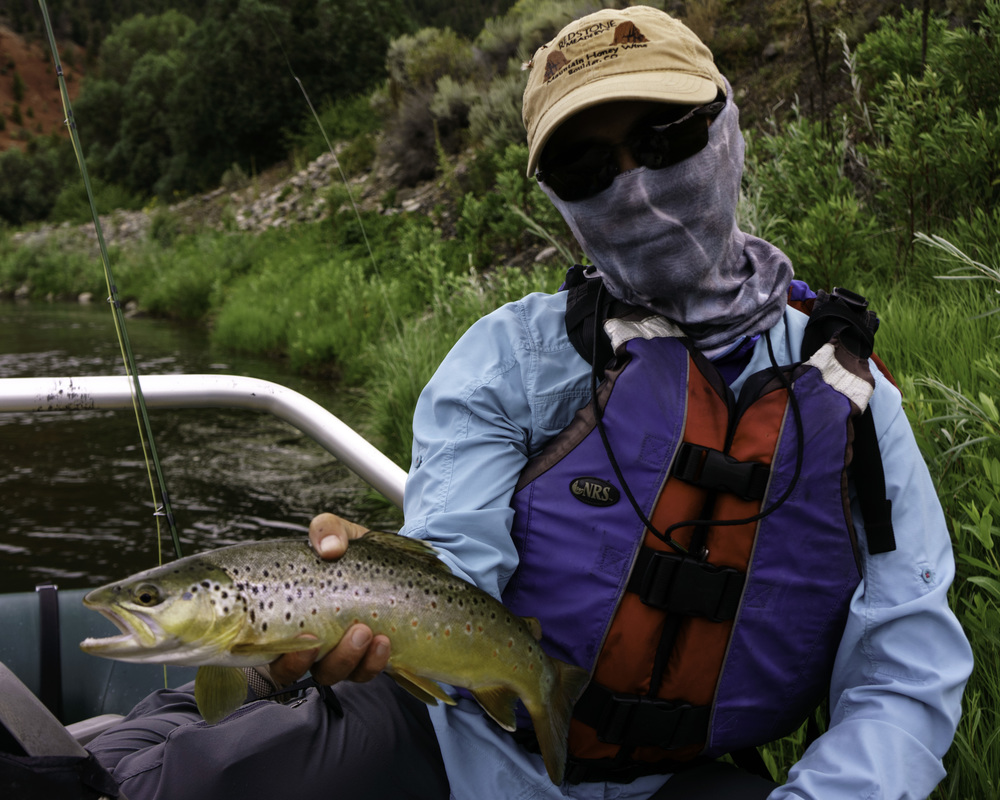 Brown Trout on a Dry Fly