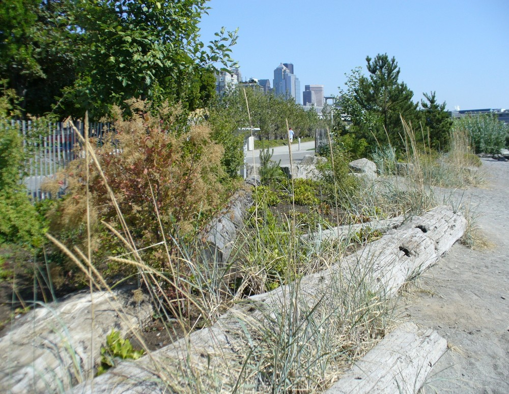 Olympic Sculpture Park, an ecological landscape