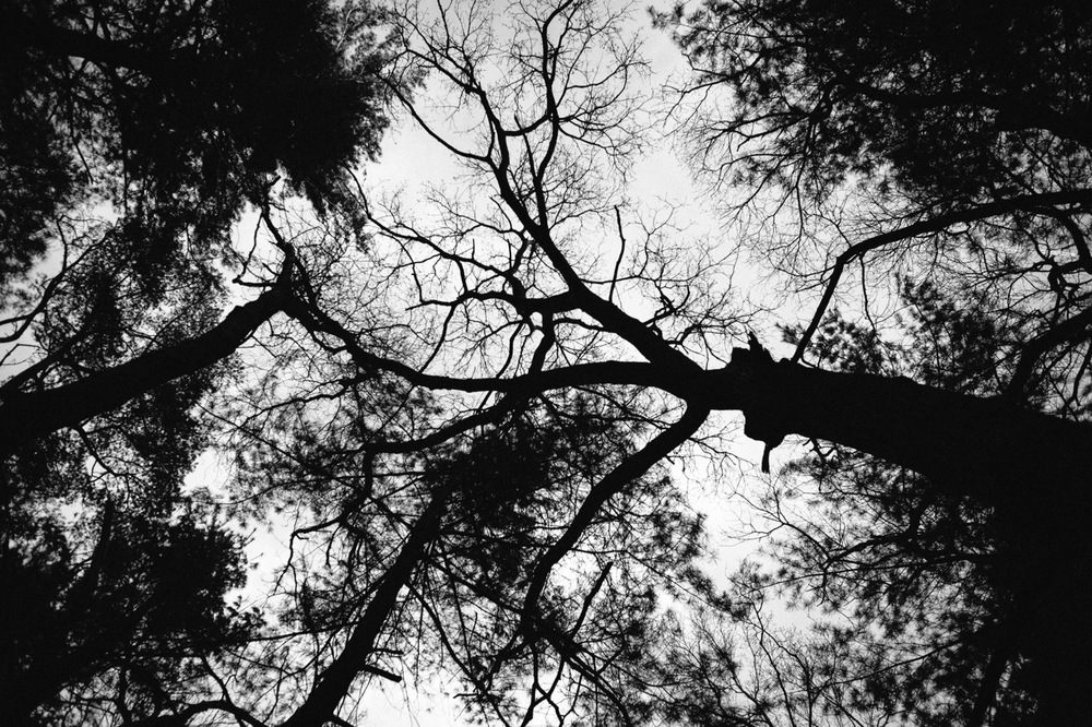 Tree branches overhead