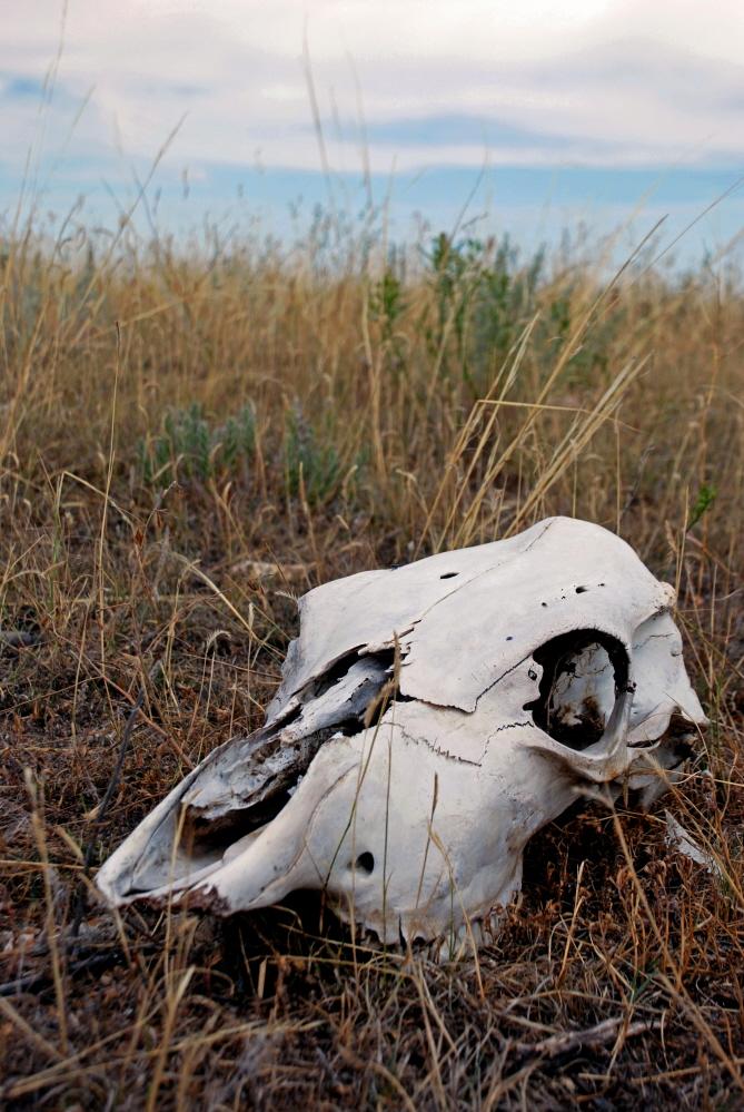 Skull FIX.jpg