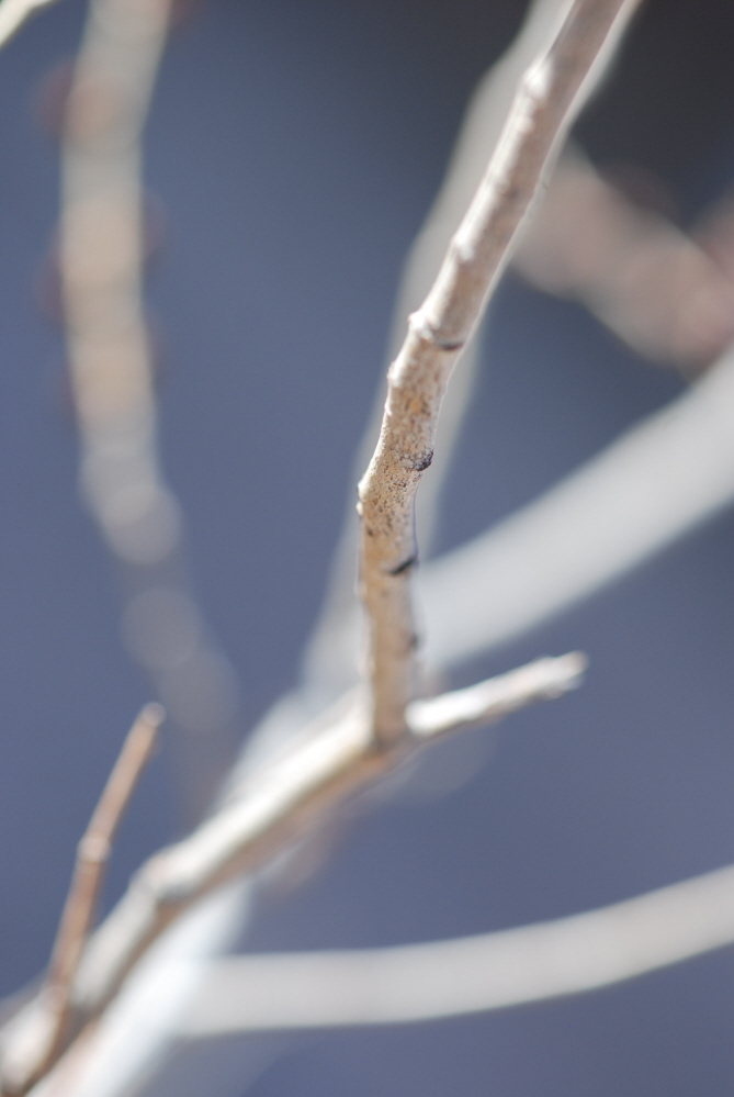 Branching Out_004.JPG
