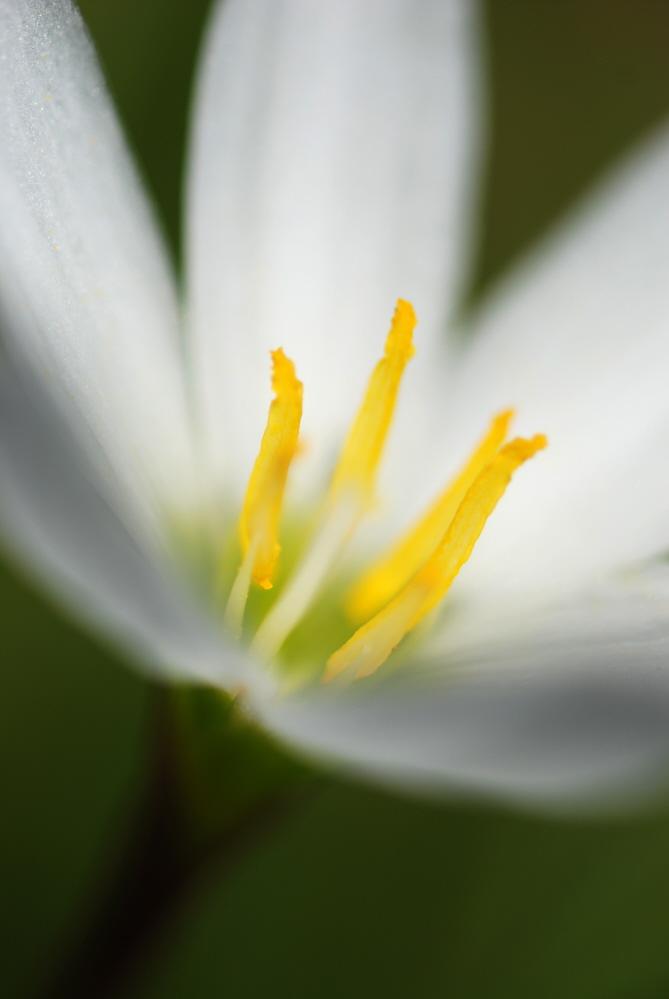 FLOWER Swamp Flower.jpg