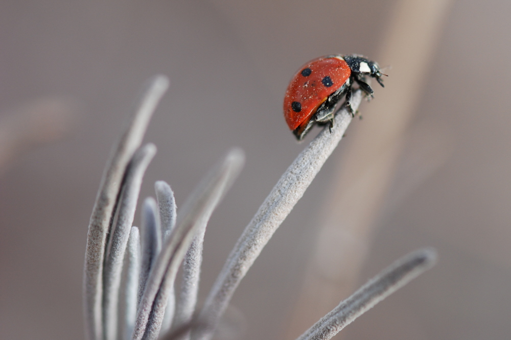 Lady Bug CROP.jpg